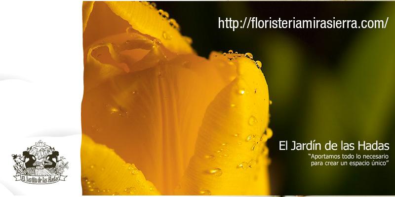 floristeriamirasierra